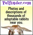 Search Petfinder for the perfect bunny companion!